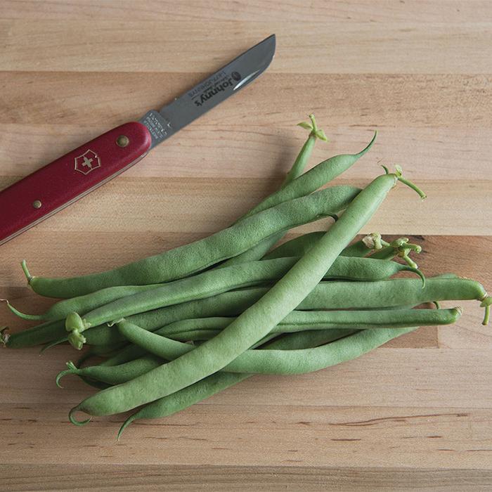 Ez Pick Bush Bean