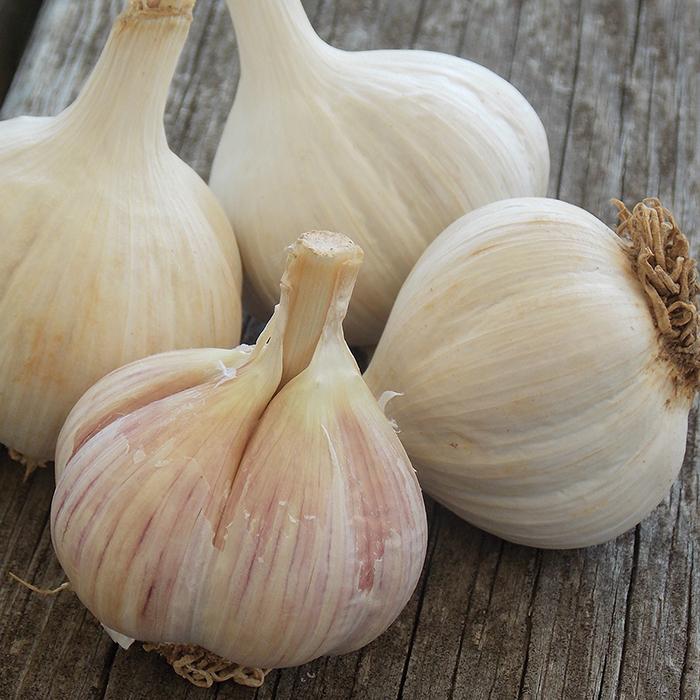 German Porcelain Garlic