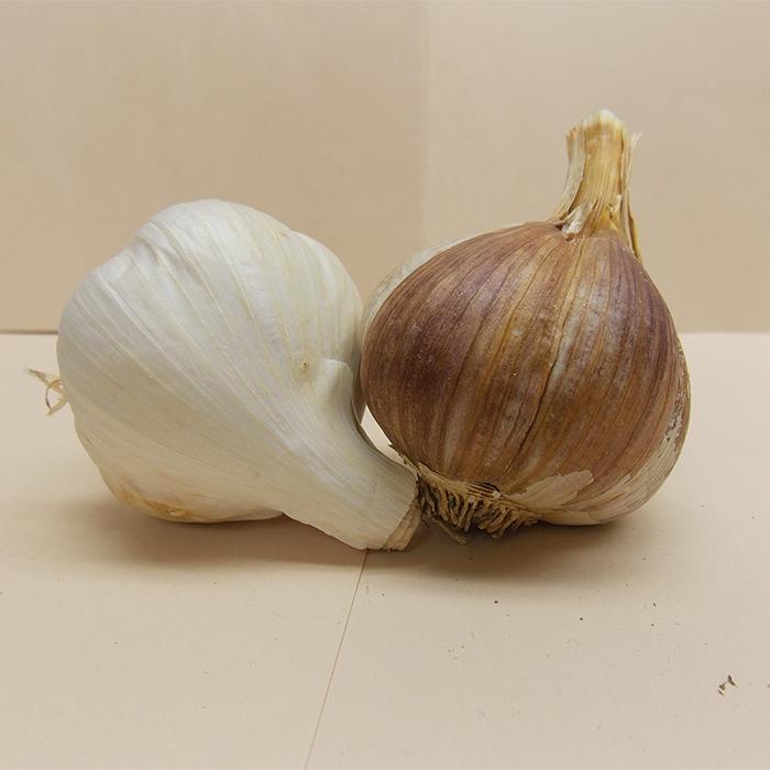 Musik Garlic