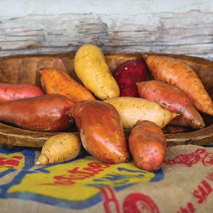 Sweet Potato Sampler For Northern Gardeners