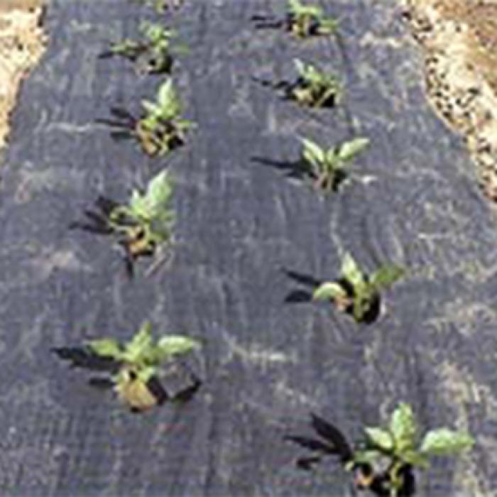 Planters Paper (4 X 100)