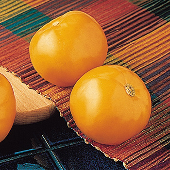 Carolina Gold Hybrid Tomato