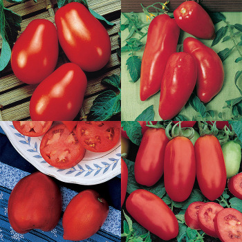 Paste Tomato Collection