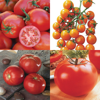 Mix Bag Tomato Collection