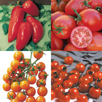 Cherry And Paste Tomato Collection