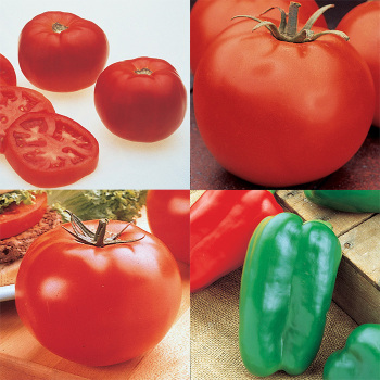 Tomato And Pepper Collection