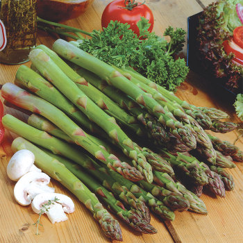 Jersey Knight Hybrid Asparagus - Roots