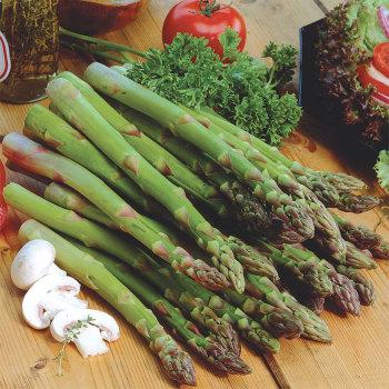 Jersey Knight Hybrid Asparagus