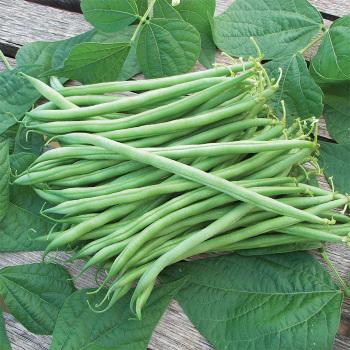 Calima French Filet Bean