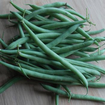 Domingo Bush Bean