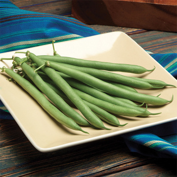 Prevail Bush Bean - 200 seeds
