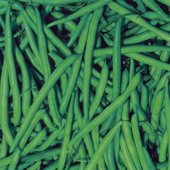 Strike Bush Bean