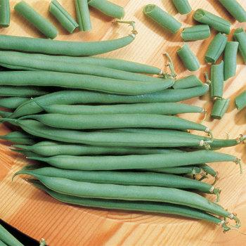 Top Crop Bush Bean