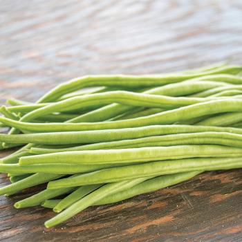 Grenada Bush Bean