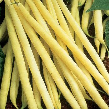 Soleil Bush Bean - 200 seeds
