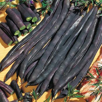Blauhilde Pole Bean