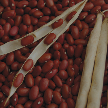 Stop Dry Bean