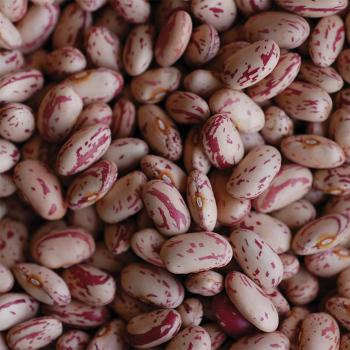 Krimson Dry Bean