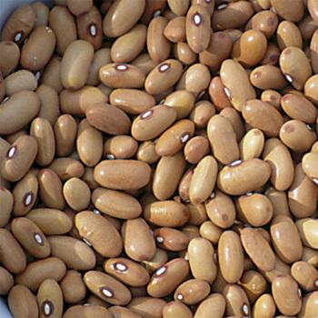 Arikara Yellow Dry Bean