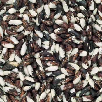 Vermont Appaloosa Dry Bean