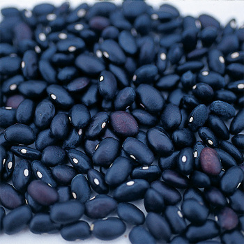Black Turtle Dry Bean - 200 Seeds