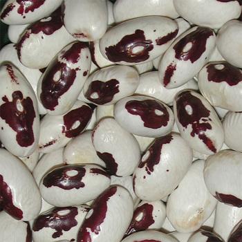 Bumble Bee Dry Bean