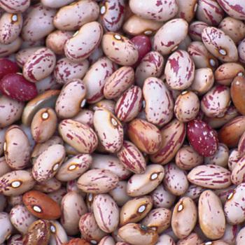 Lina Ciscos Bird Egg Dry Bean