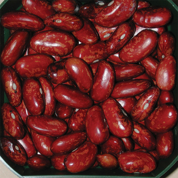 Scarlet Beauty Dry Bean