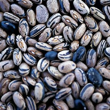 Peregion Dry Bean