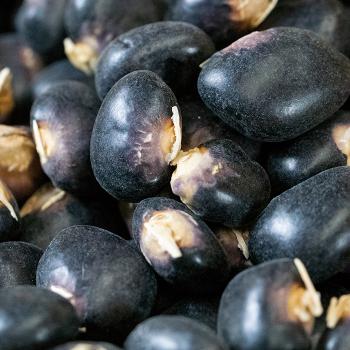 Succotash Dry Bean