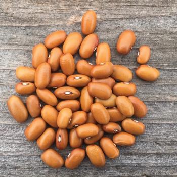 Swedish Brown Bean