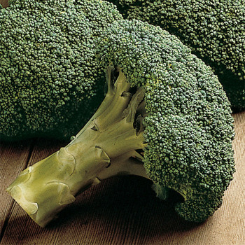 Packman Hybrid Broccoli - 50 seeds