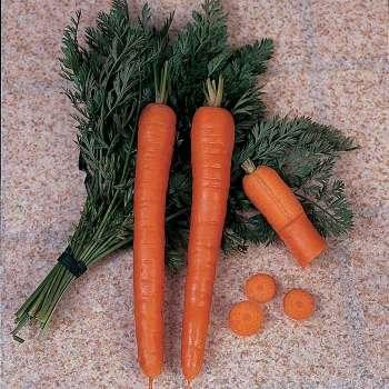 Ingot Hybrid Carrot