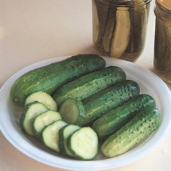 County Fair Improved Hybrid Cucumber