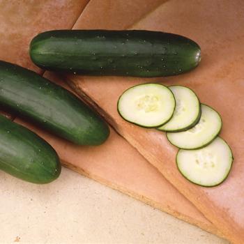 Slicemore Hybrid Cucumber