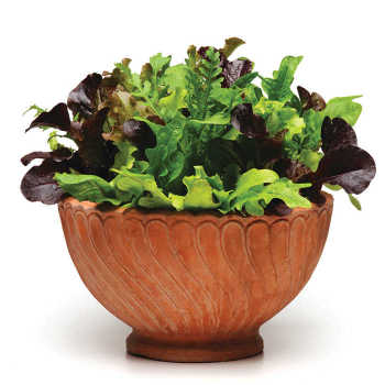 Simply Salad Alfresco Mesclun Mix