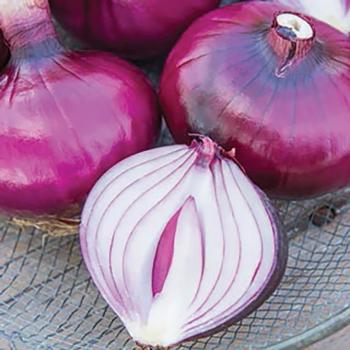 Red Bull Hybrid Onion