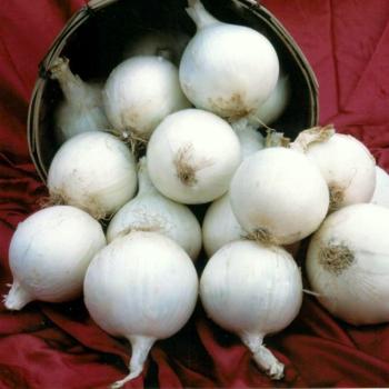 White Sweet Spanish Onion