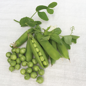 Extra Early Pedigree Snap Pea