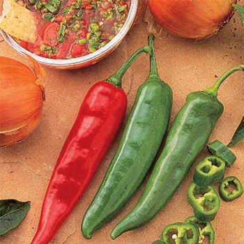Garden Salsa Hybrid Pepper Plant