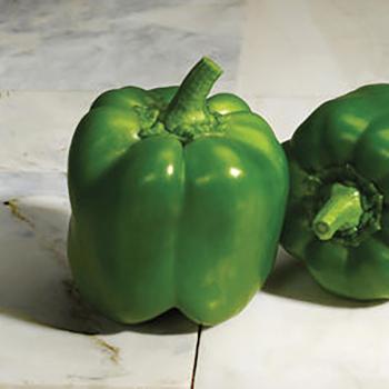 Classic Hybrid Pepper