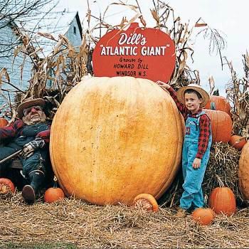 Dills Atlantic Giant Pumpkin