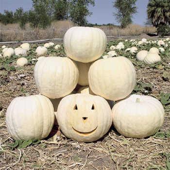 Full Moon Pumpkin