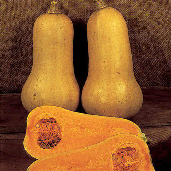 Early Butternut Hybrid Squash