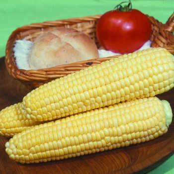 Earlivee Hybrid Sweet Corn