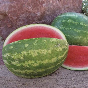 Sweet Eat'n Hybrid Watermelon