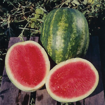 Triple Crown Hybrid Watermelon