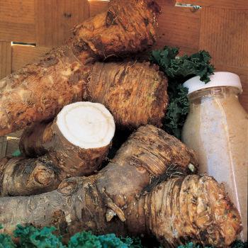 Bohemian Maliner Kren Horseradish - Crowns