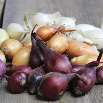 3 Color Onion Set Collection - 1 Quart
