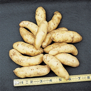 Fingerling Salad Potato